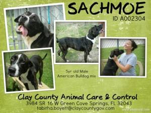 Sachmoe